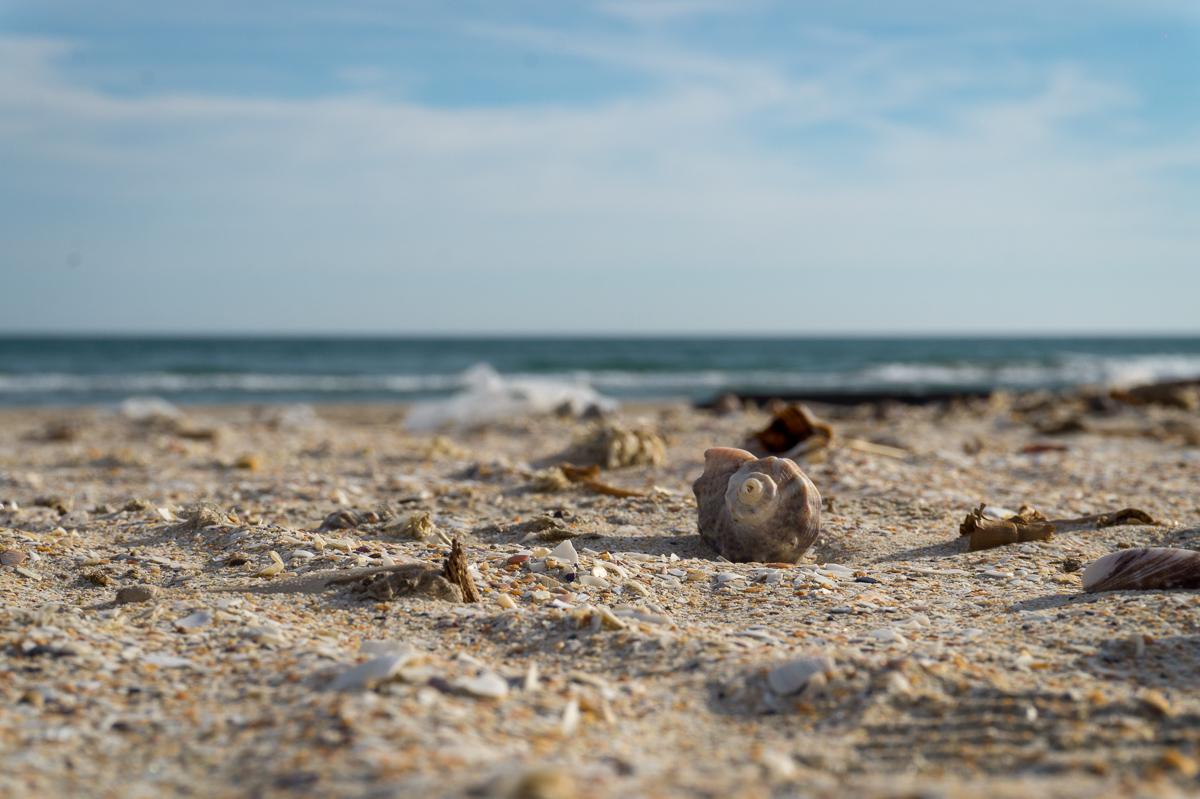 dan-pandrea-beach-shot
